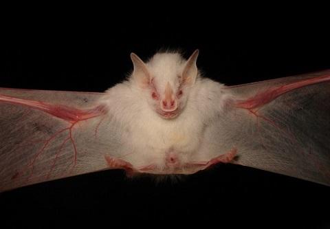 Albino (Beyaz) 10 Hayvan
