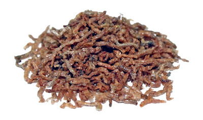 freeze-dried bloodworms for betta fish