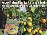 Pupuk Tabulampot Paling Ampuh - Fruitop Nasa