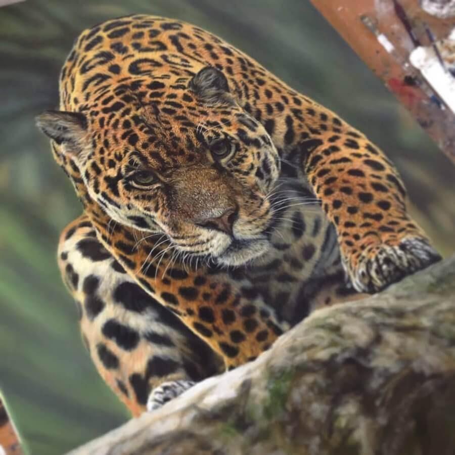 03-Leopard-Stalking-Amber-Tyldesley-www-designstack-co