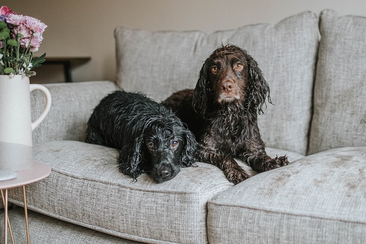 The Best Dog Friendly Sofa