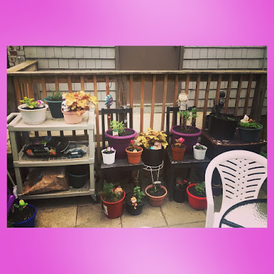 using old furniture as a plants stands and strorage space for an outdoor container garden on a city patio