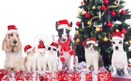 muchos perros con gorros de Navidad