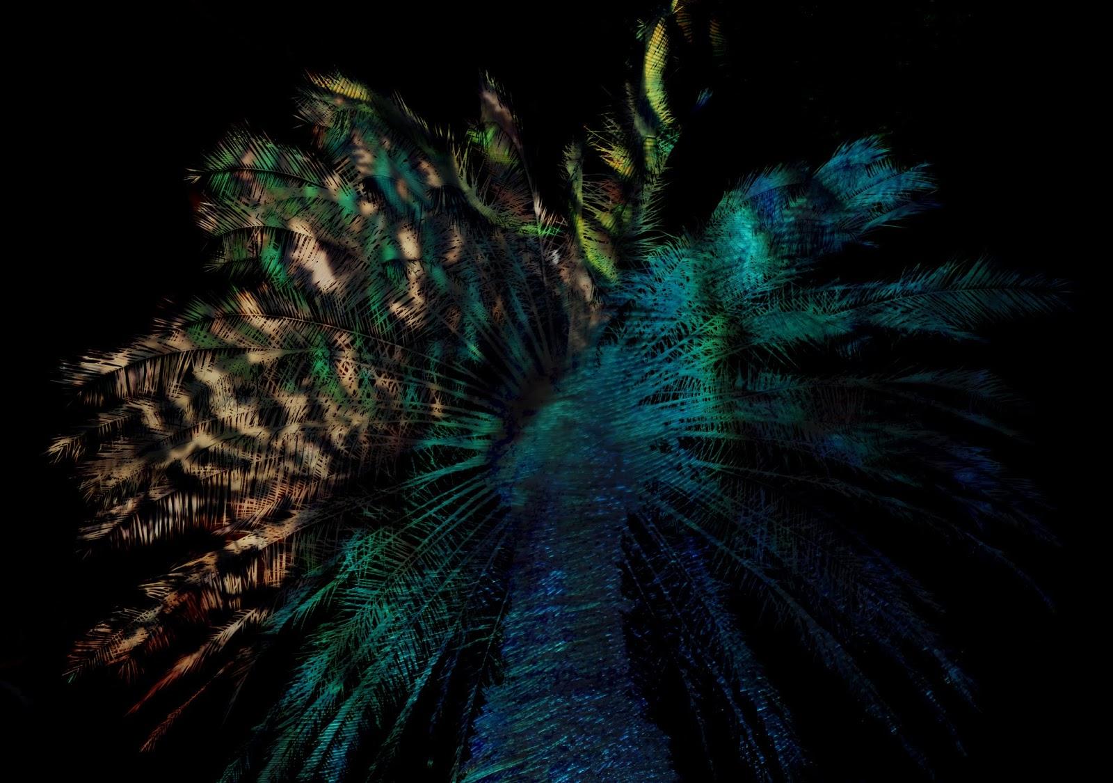 Rotorua Artist Janet Keen S Photography Mosaics Paintings Amp Writing