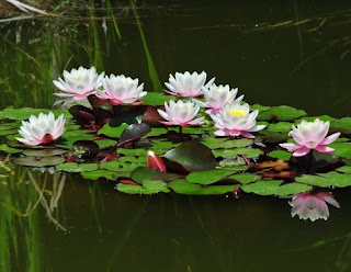 http://www.dunia-mulyadi.com/2017/01/contoh-adaptasi-fisiologi-tumbuhan.html