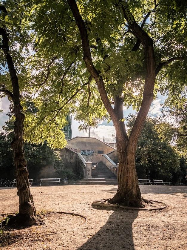 Die Sonne scheint auf zwei grüne Laubbäume in einem Park