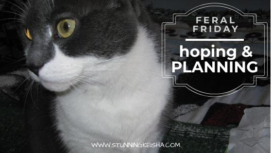 Feral Friday: Hoping & Planning