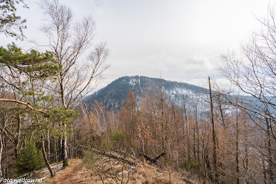 Strome zejście z Kozła w kierunku Przełęczy Koziej; wyłania się Borowa