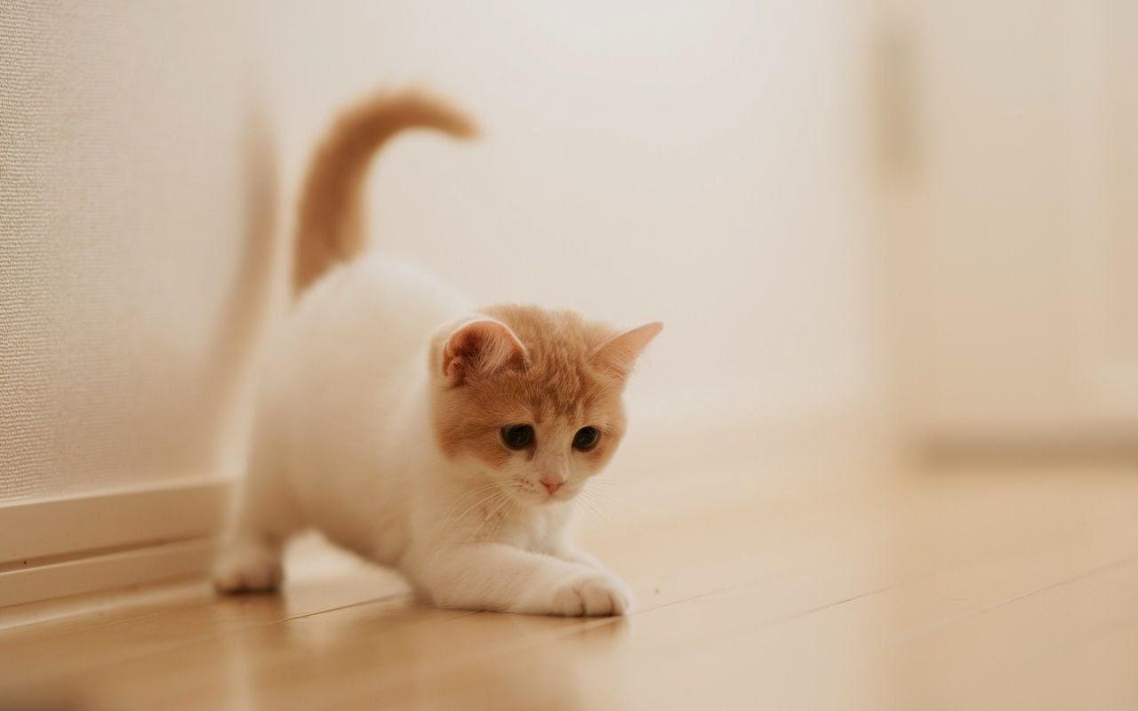 Kucing Kecil Yang Lucu Majalah Cat Dog