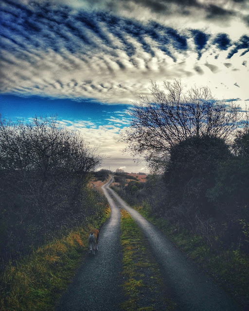 road, sky, clouds, dog walking, Connemara, Galway, Ireland