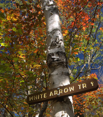 "Trail sign that says ""White Arrow Tr."" nailed to a white birch with vivid fall leaves"