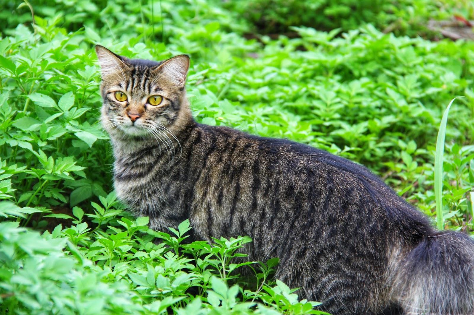 20 Koleksi Gambar Kucing Comel Bernama Tambi 3