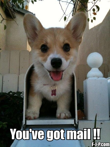 Funny You've got mail Dog Meme Joke Picture