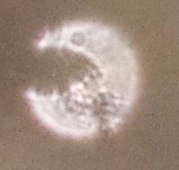 strange orb