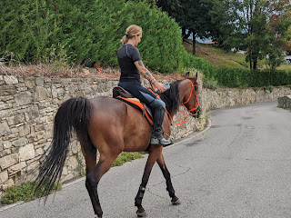 A horse on Via Orsarola.