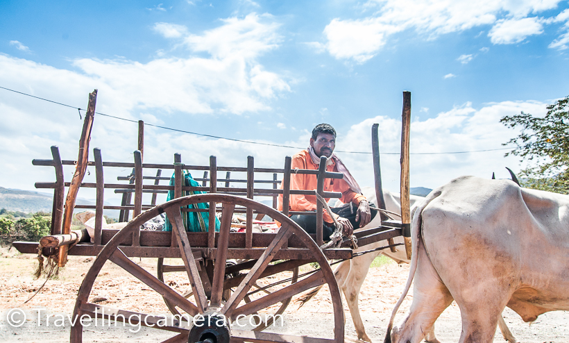 It was harvest season, so we saw lot of ox-carts on our way. Some were going to pick the crop and few were coming on other sided in loaded, & at times overloaded form.