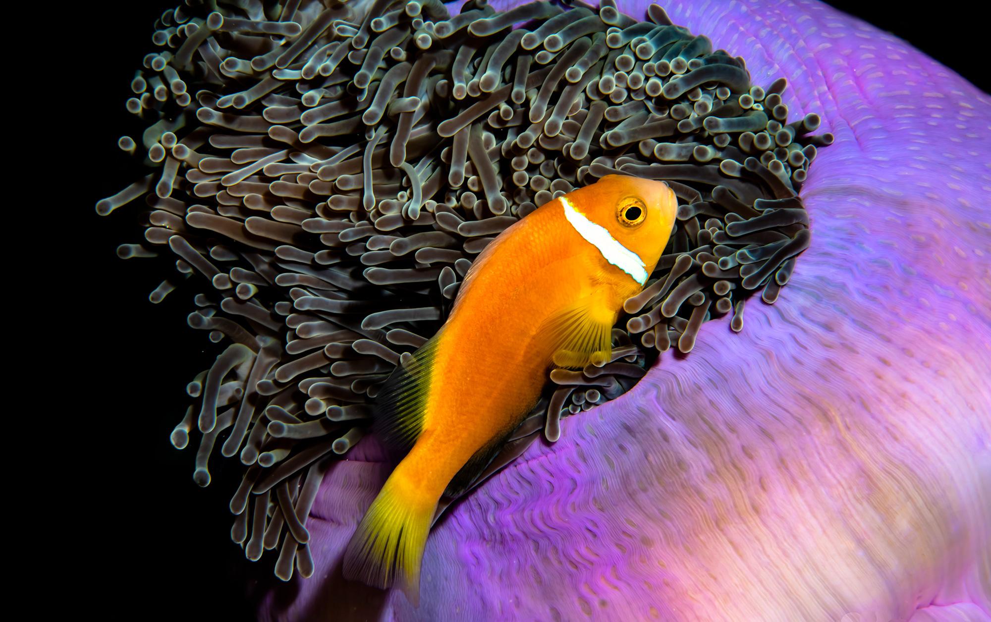ocean photography awards 2020 04