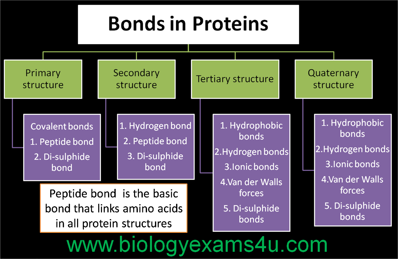 Different types of bonds interactions in protein structure