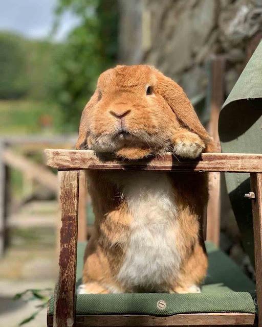 Teks deskripsi tentang kelinci. Contoh soal dan jawaban.