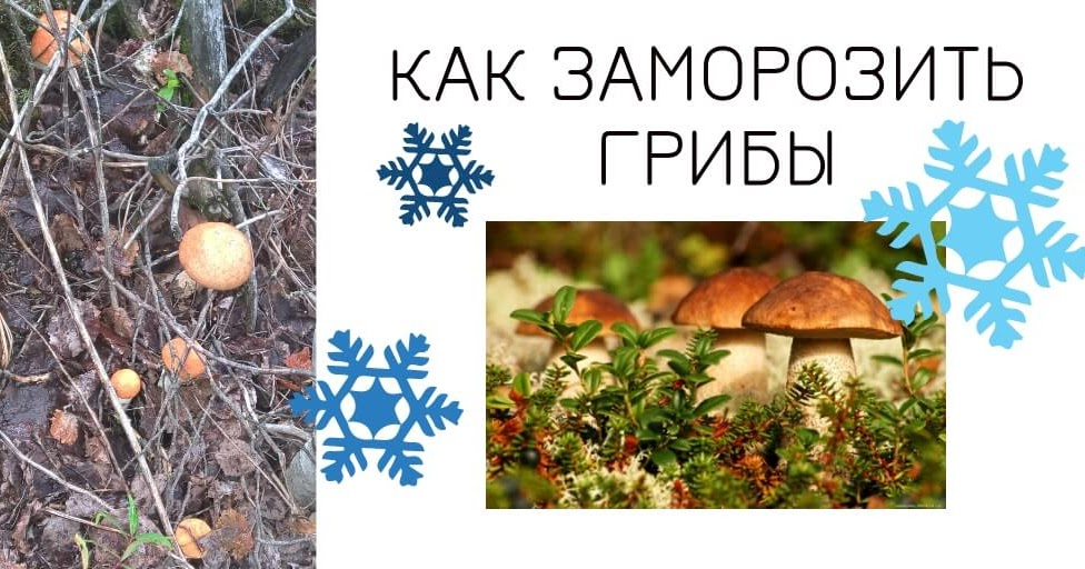 Как заморозить гриб баран