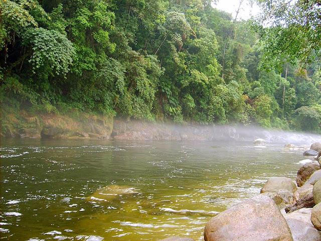 Myanmar National Park Flora