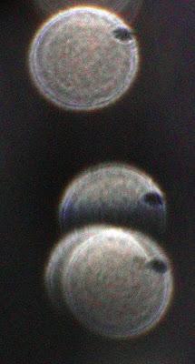 eye-like holes in orbs