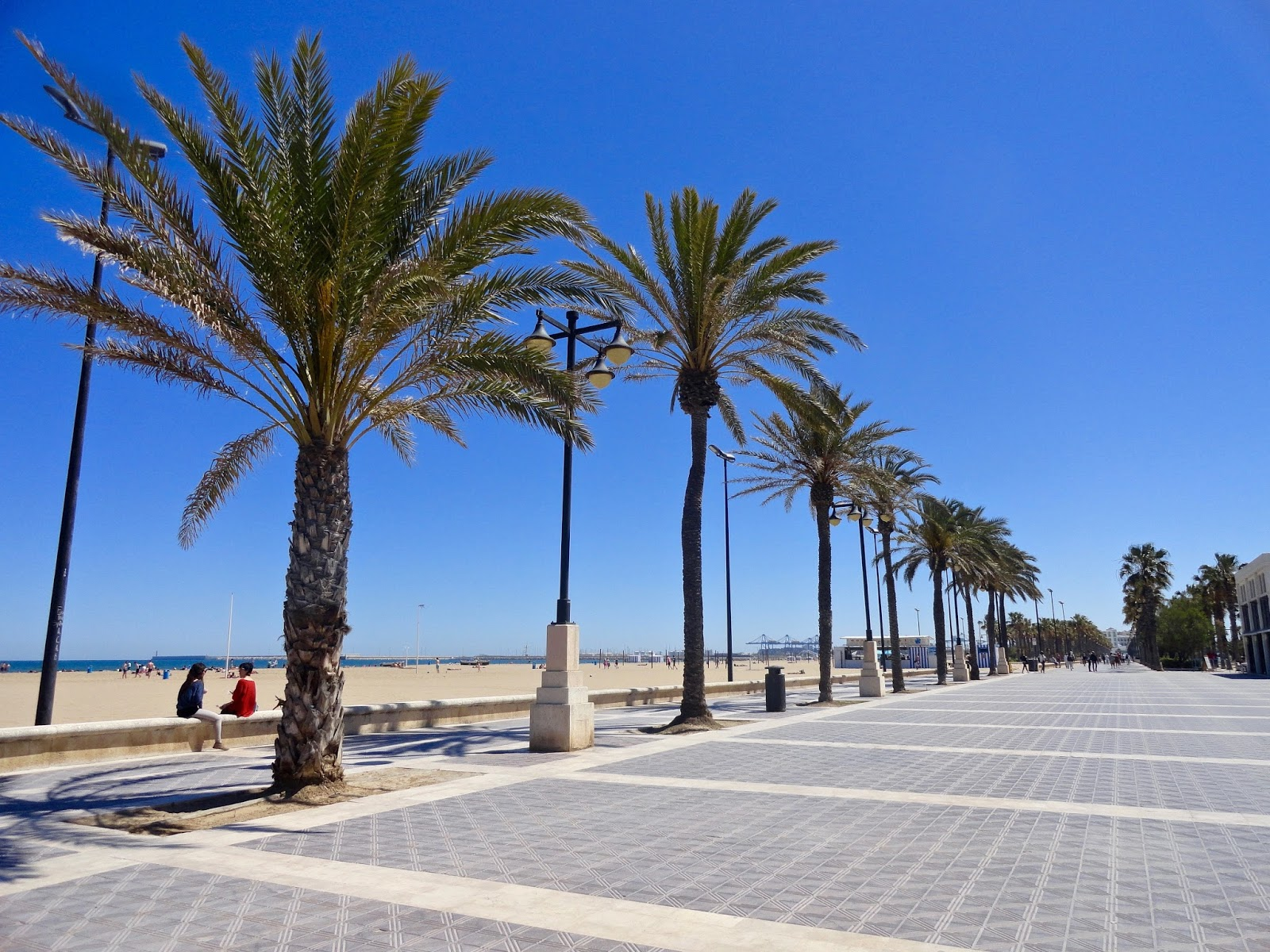 spain valencia beach playa palm trees sea