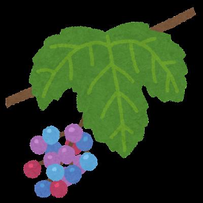 ノブドウのイラスト