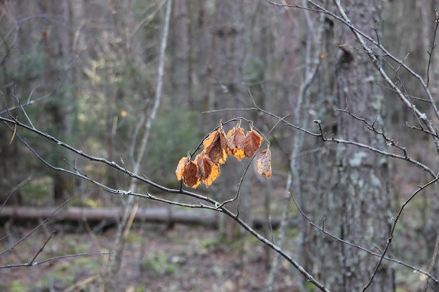 Желтые листья в лесу