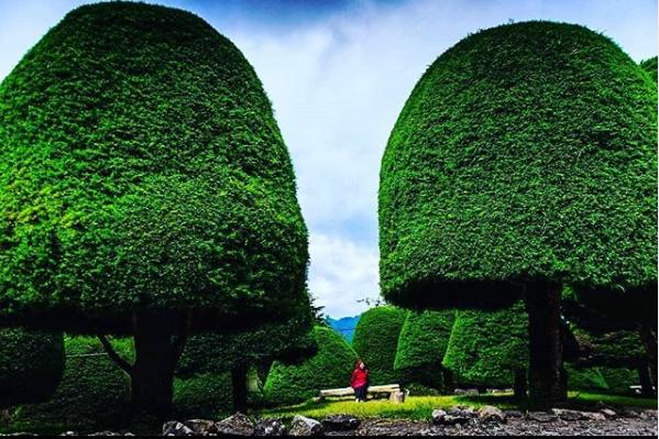 Pemandangan Elok Bukit Jamur Rancabolang Ciwidey