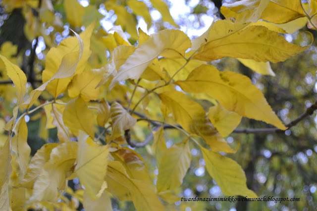 jesien