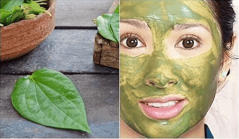 Cara Membuat Masker Daun Sirih Untuk Wajah