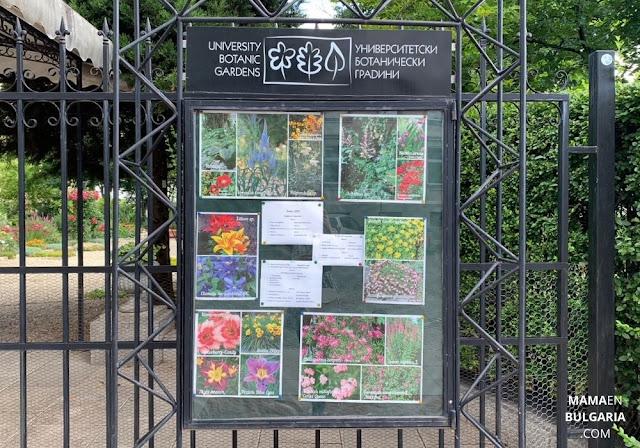 plantas verano Jardín Botánico Sofía Bulgaria