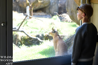 young child and exotic cat at the zoo