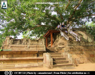 The sacred Bodhi-tree, Isurumuniya
