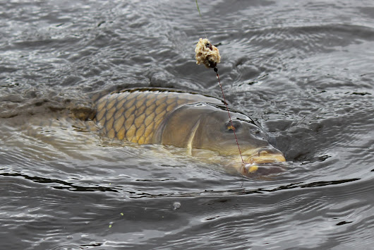 NECC (North East Carp Conference) Coming to CT on April 21