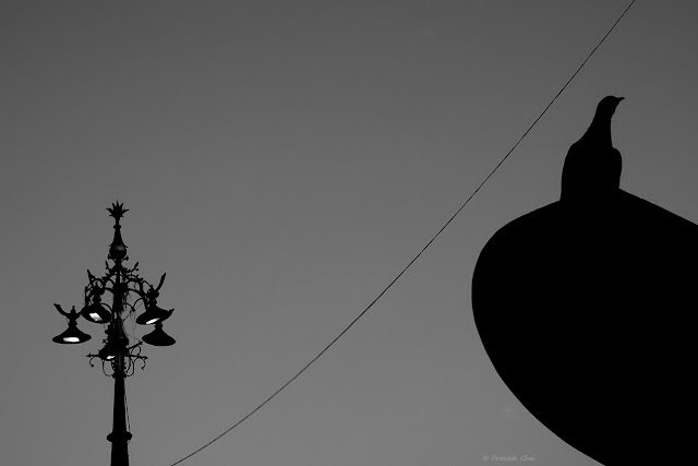 A Black and White Minimal Art Photograph of a Bird sitting on a Sign board at Panch Batti, Jaipur India.