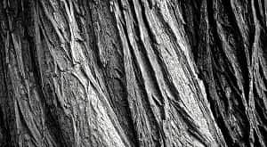 Rumus menghitung penyusutan dan pengembangan kayu dapat dibedakan menjadi 3 bagian menurut para ahli. Rumus penyusutan kayu adalah Penyusutan (%) = (Dimensi awal- Dimensi akhir)/(Dimensi awal) x 100. Sedangkan rumus pengembangan adalah Pengembangan (%) = (Pertambahan dimensi)/(Dimensi semula) x 100