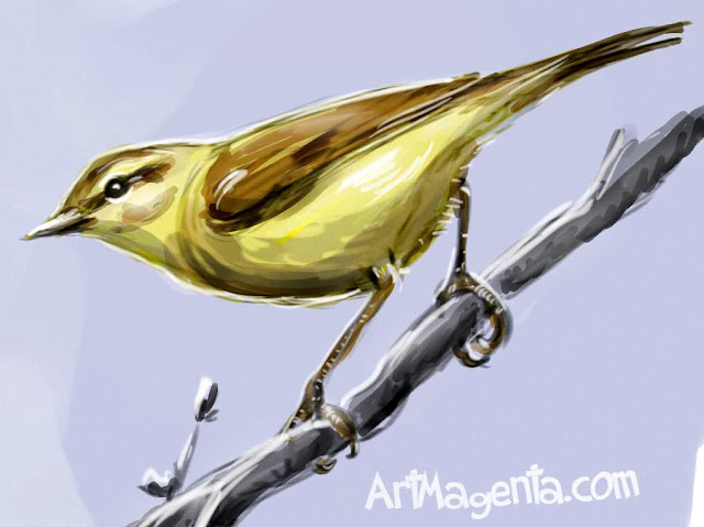 Willow Warbler sketch painting. Bird art drawing by illustrator Artmagenta
