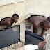 PHOTOS: See What This Harden Criminal Did To Someone's House While Trying  To Steal a Plasma TV
