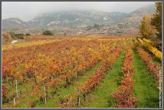 Viñedos otoño Briñas La Rioja