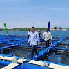 Menteri Kelautan dan Perikanan Kunjungi Lokasi Pembudidayaan Keramba di Batam