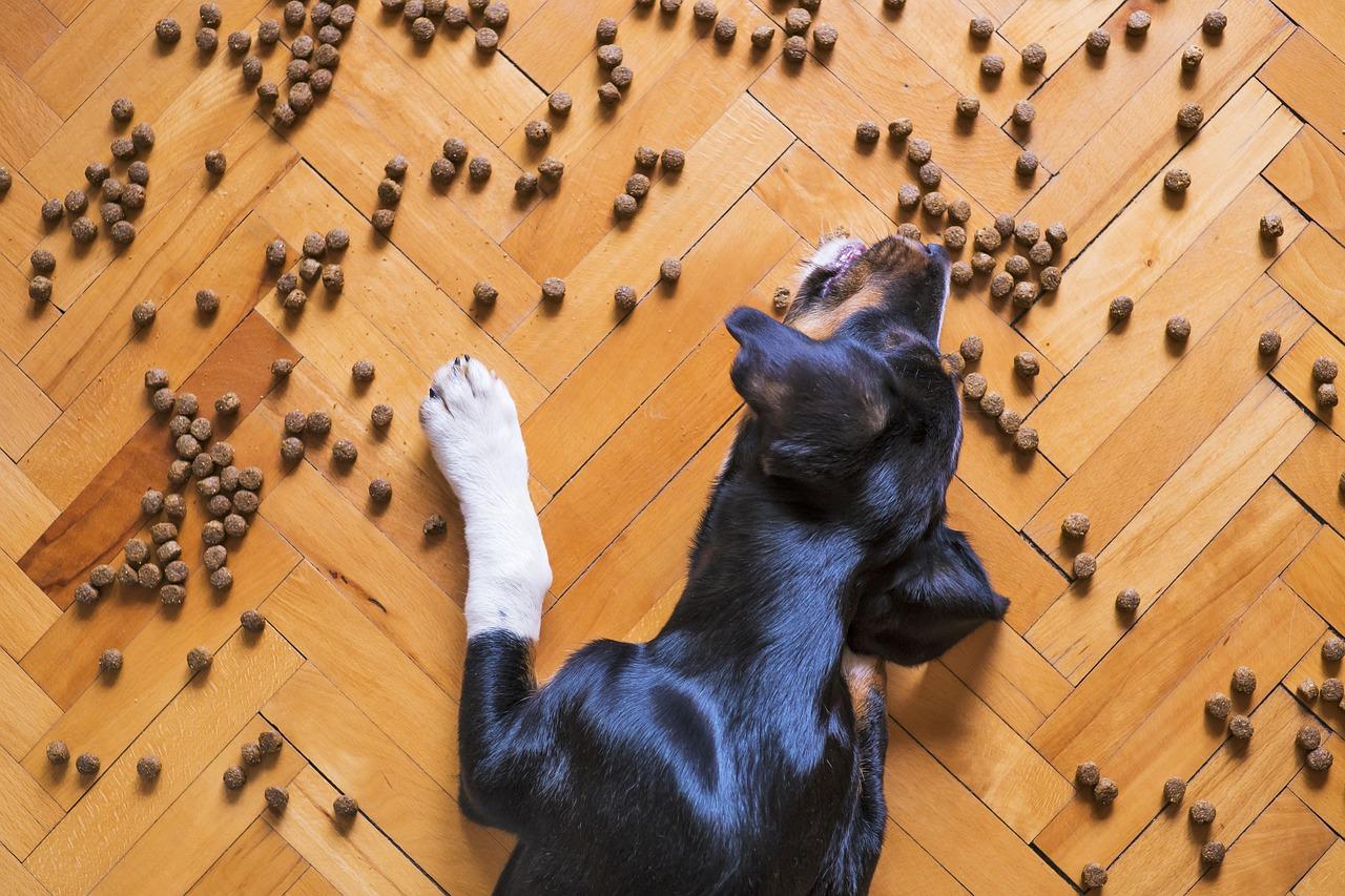 Combien de fois par jour un chien doit manger?Portion et fréquence des repas