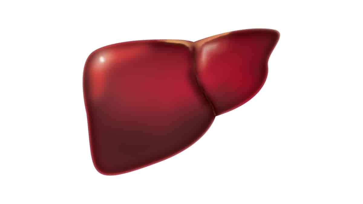 sinais que podem indicar câncer no fígado