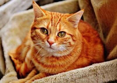 Mengatasi kucing stres