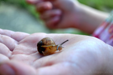 baby snail.