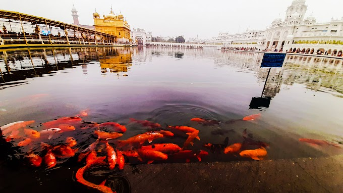 Golden Temple Amritsar Punjab