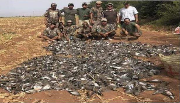 بالفيديو مجزرة خليجية في حق الثروة الحيوانية بجنوب المغرب
