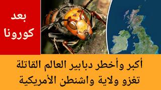 بعد فيروس كورونا.. أكبر وأخطر دبابير العالم القاتلة تغزو ولاية واشنطن الأمريكية || The world's most dangerous deadly wasps invade Washington state