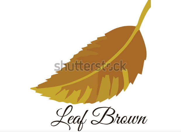illustrations of flowers and leafs